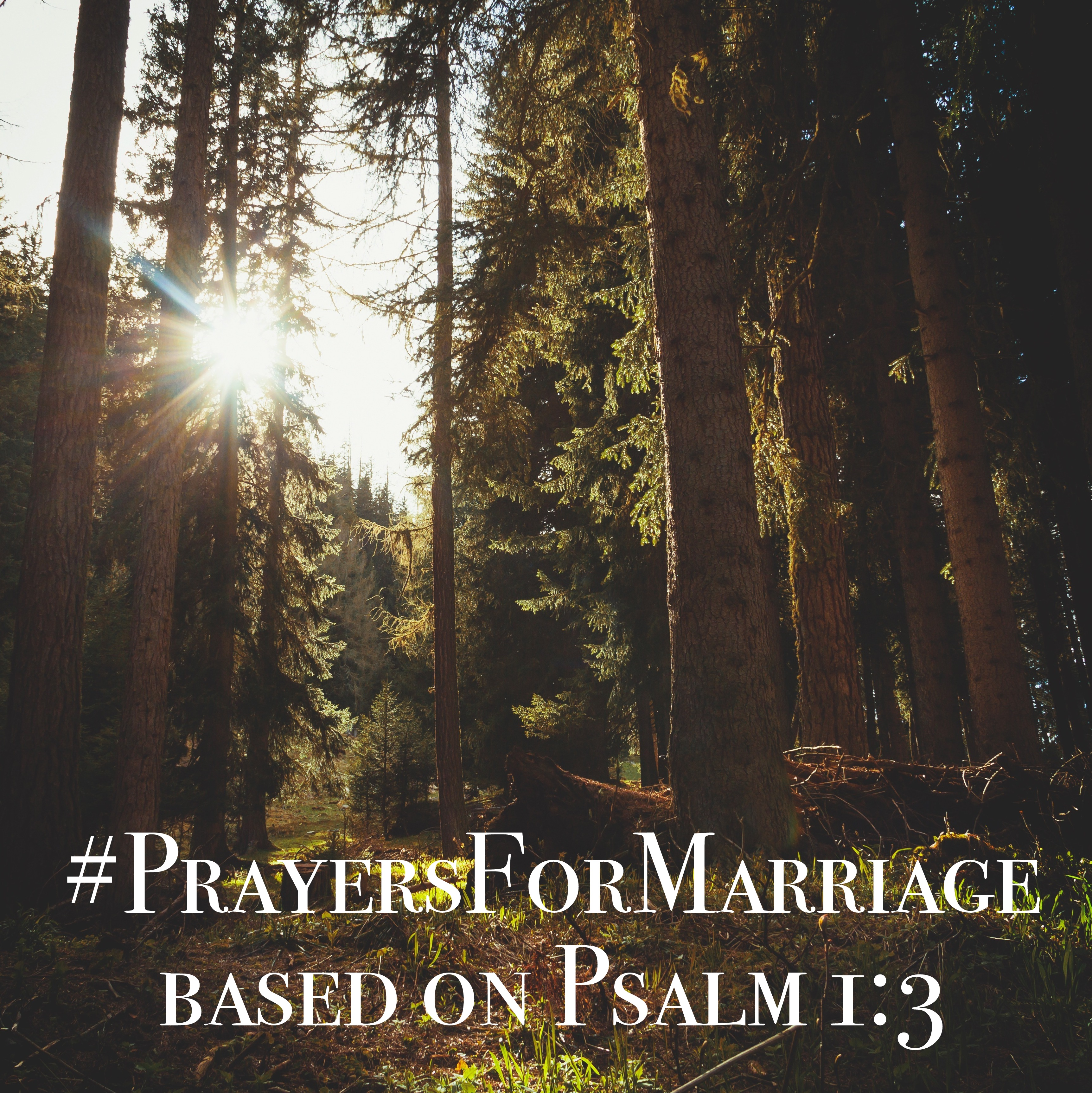31 Verses to Pray for Your Marriage {Psalm 1:3}