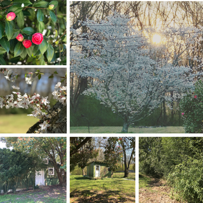 10 Things I'm Loving {March 2019} —  Underwood Estates in the spring is absolutely gorgeous!